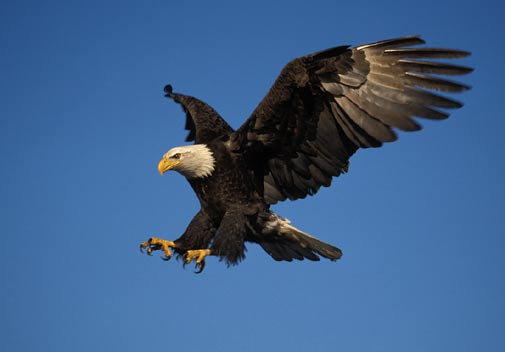 the eagle landing by - photo #47